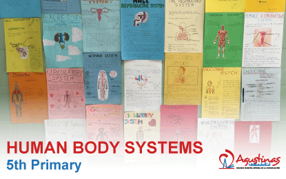 Human Body Systems 5th Primary